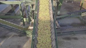Almazara Aceite oliva